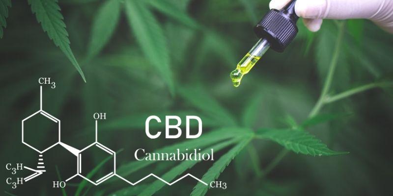 olio di cbd cannabidiolo