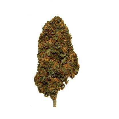 Red berry infiorescenze cannabis light