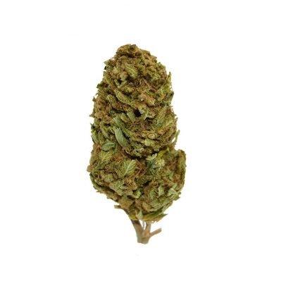 Spicy green infiorescenza cannabis light