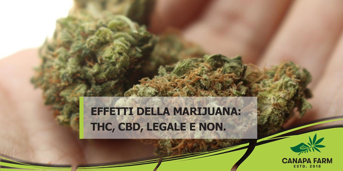 effetti marijuana