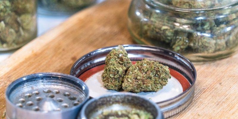 thc nelle infiorescenze cannabis