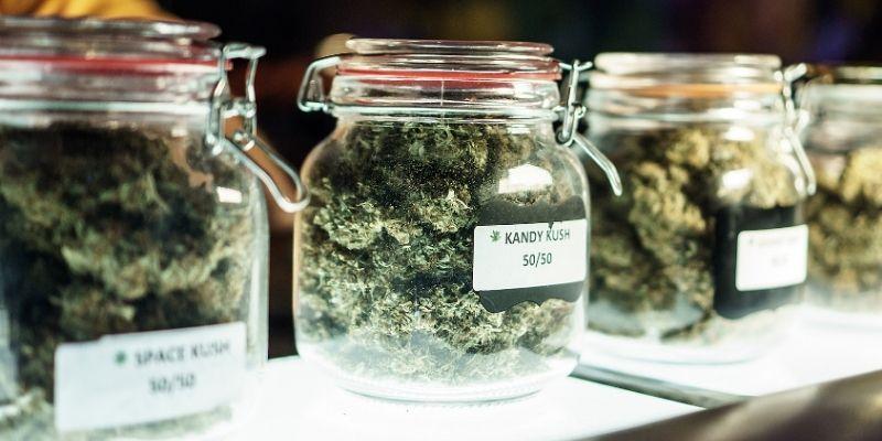 infiorescenze marijuana ganja