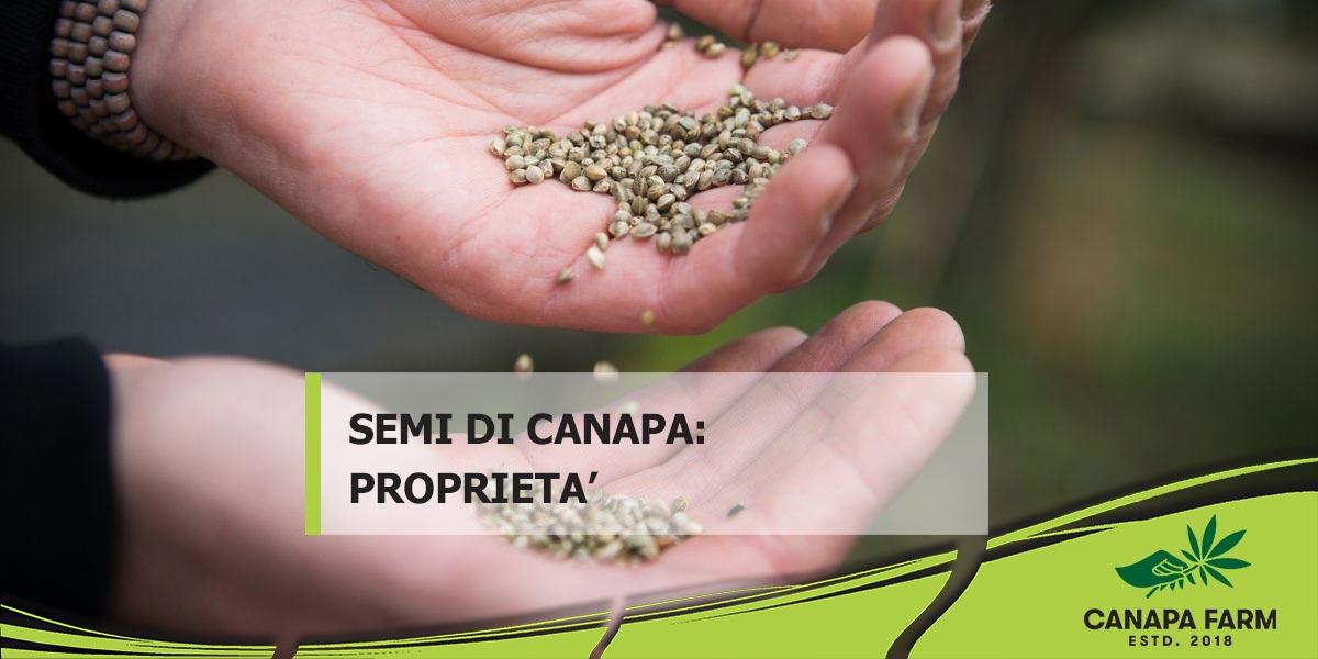 semi di canapa proprietà
