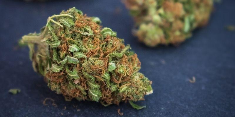 orange bud marijuana
