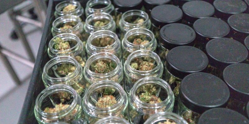 essiccazione cannabis concia