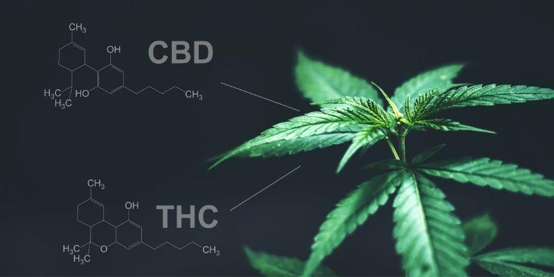 molecola thc e cbd cannabis