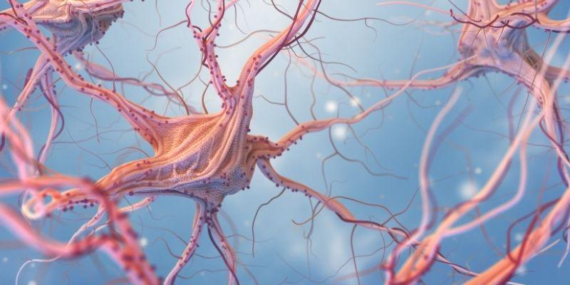 thcv cannabis neuroni e sistema nervoso