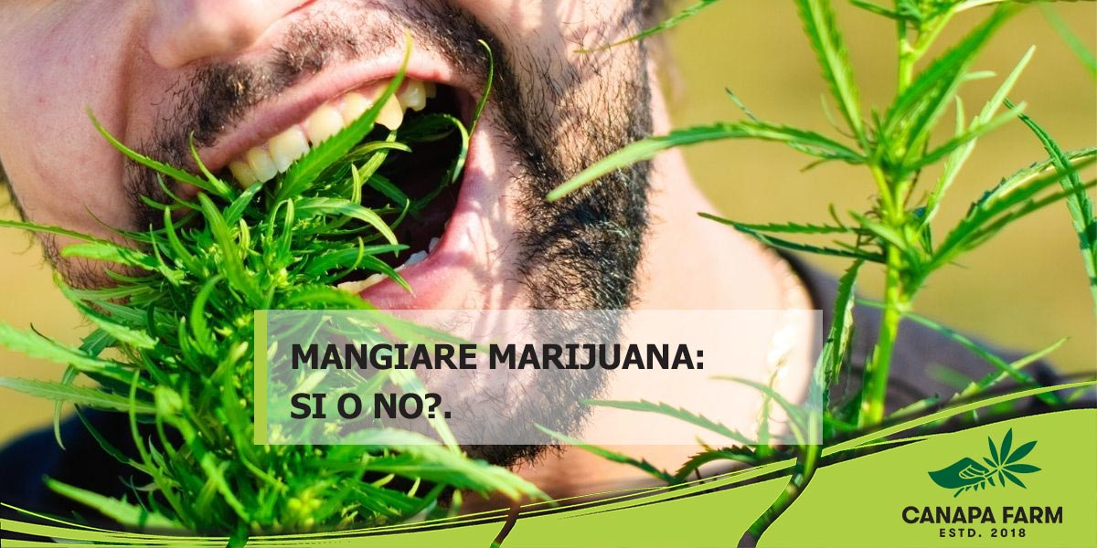 mangiare marijuana