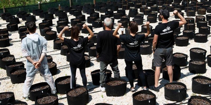 canapafarm produttore cannabis Italia