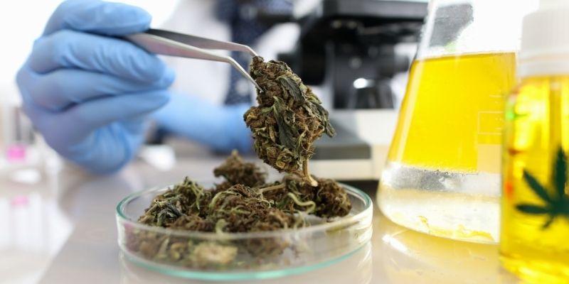 cannabinoidi marijuana