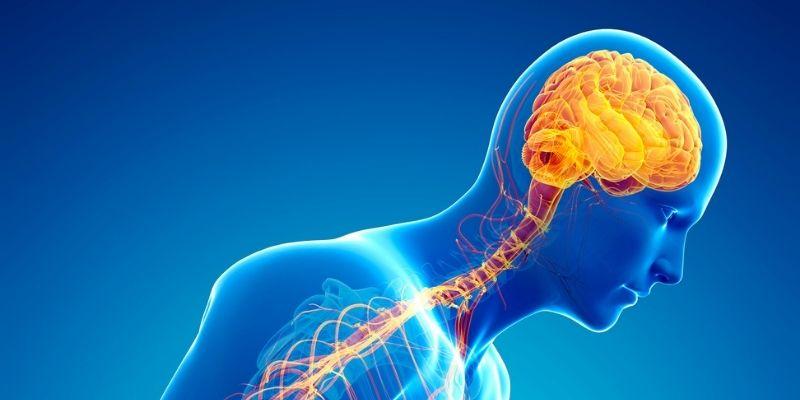 parkinson sistema nervoso