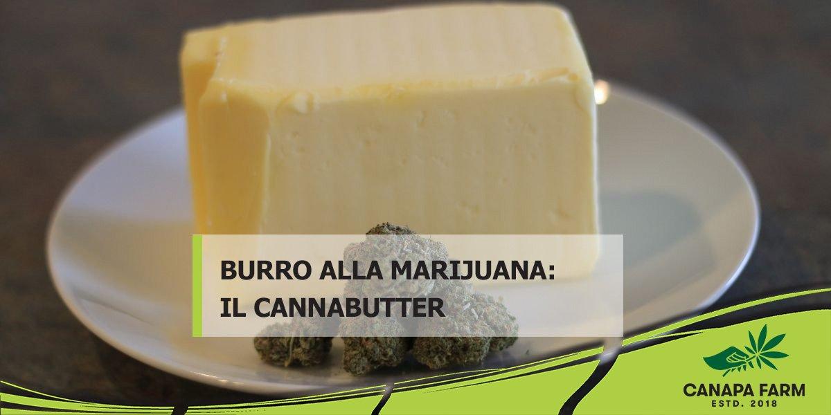 burro marijuana