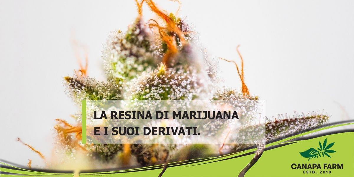 resina cannabis